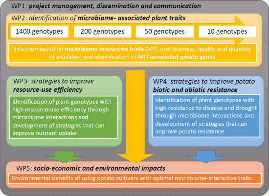 A schematic representation of the WPs and experimental plan, including cultivar selection and identification plant markers associated with high microbiome interactions
